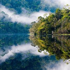 The serenity of the Tarkine Wilderness, tucked away in Tassie's pristine North West corner.  @mrdavidgoudie captured these picture perfect reflections while cruising down the still waters of the Pieman River near Corinna.  Once a thriving gold mining town, the tiny settlement of Corinna is now an oasis for nature lovers wanting a secluded wilderness experience.