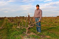 Leland Noma, second generation grower (Lodi's east-side)
