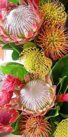 Flowers of Butchart Gardens - Pink and white Protea, bright pink Ginger flowers and yellow Spider Mums - Flor Protea, Protea Bouquet, Protea Flower, Bouquets, Cactus Flower, Unusual Flowers, Unusual Plants, Rare Flowers, Vegetable Gardening