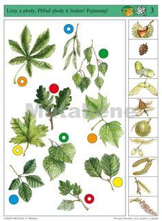Výsledek obrázku pro lesní stromy Montessori, Planters, Education, Fruit, Learning, Fall, Nature, Google, Autumn