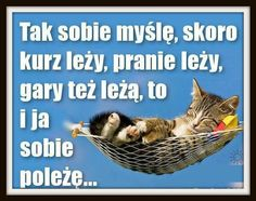 Zdjęcie Animals And Pets, Funny Animals, Funny Lyrics, Weekend Humor, Motivational Quotes, Inspirational Quotes, Happy Photos, Some Quotes, Man Humor