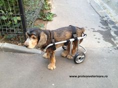 wheelchair for dogs Dogs, Animals, Animales, Animaux, Pet Dogs, Doggies, Animal, Animais