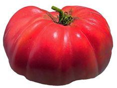 Heirloom Tomato Seeds, Tomatoes, Non-GMO, Untreated, Organic Seed – Sandia Seed Company Heirloom Tomato Seeds, Heirloom Tomatoes, Potted Fruit Trees, Types Of Lettuce, Cherokee Purple, Seed Catalogs, Organic Seeds, Chicken Eggs, Growing Vegetables