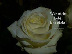 Rosen und Liebe