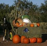 Arizona Pumpkin Patches, Corn Mazes, Hayrides and More, Find Halloween and Fall Fun in Arizona!
