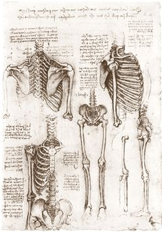 We can learn a great deal from analyzing Leonardo da Vinci drawings. Here are five lessons from this Renaissance master. Anatomy Study, Anatomy Drawing, Anatomy Art, Human Anatomy, Leg Anatomy, Anatomy Sketches, Leonardo Da Vinci Dibujos, Arte Com Grey's Anatomy, Human Skeleton