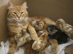 母親ネコとひよこたち