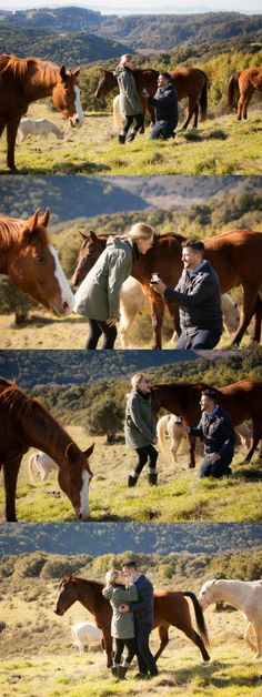 He proposed in the middle of their pasture surrounded by 30 horses! It was such a sentimental proposal location, and the photos are beautiful.