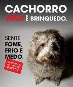 ELES SÃO PARTE DA NOSSA FAMÍLIA <3 <3 <3 EU AMO, EU CUIDO! #petmeupet #protecaoanimal #direitoanimal #cachorro #abandonoecrime