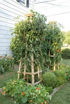 Build a Super-Sturdy Tomato Tower: Vertical Gardening | Organic Gardening - gardenfuzzgarden.com