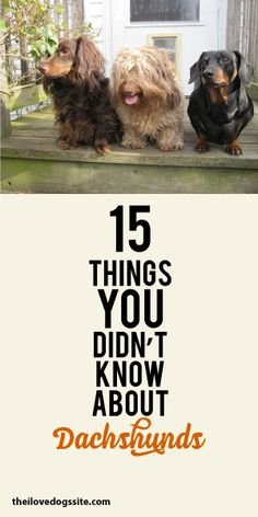 15 Things You Didn't Know About Dachshunds