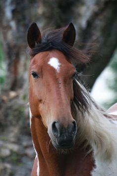 L'équithérapie : thérapie par le cheval