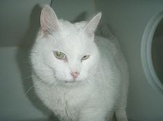 ate Found:Jul 8, 2013 Found Location: (53AVE AND 76ST) Red Deer, Alberta, Canada Found Notes:FOUND DSH WHITE MANX FEMALE CAT ON JULY 6/13 @ 6PM ON 53AVE AND 76ST RED DEER. BROUGHT INTO FACILITY ON JULY 8/13 @ 1:35PM. NO TATTOO, MICROCHIP OR ANY OTHER VISIBLE IDENTIFICATION. WT: 3.37KG If You Have Lost This Pet Contact:  Alberta Animal Services Alberta Animal Services Email: info@albertaanimalservices.ca Phone: 1 (866) 340-2388 Shelter Reference #: 30079