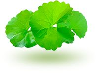 VitaDermax Plant Leaves, Dry Skin, Women Health, Oven, Muscle Atrophy, Dry Face, Deserts, Face Contouring, Ageing