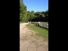 The Running of the Goats at Sunflower Farm - YouTube