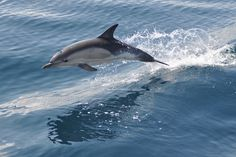 Take a whale and dolphin watching trip in Torridon.