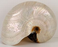 Carved and pierced Nautilus shell 'Australia' c1900, the shiny outer surface is similar to mother of pearl. The carving & pierced work is exquisite. 'Australia' is carved at the back and below the name, a profile of an Aboriginal man.