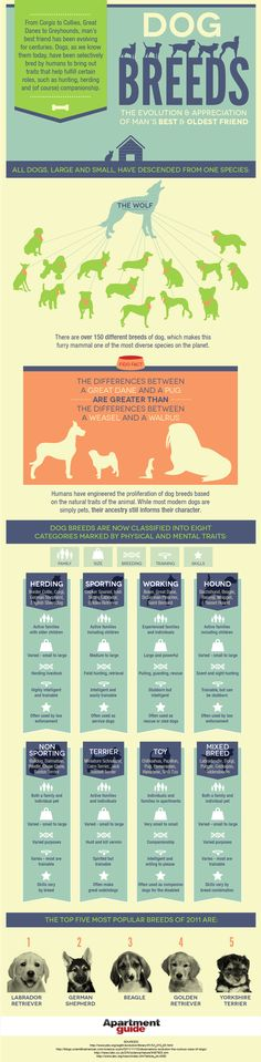 Did you know there are more than 150 different breeds of dogs? Use our guide to find the perfect dog for your space.