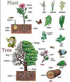 Подборка для любителей ботаники... #english #vocabulary #botany #английский #ботаника
