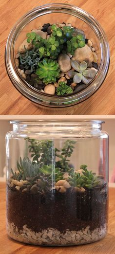 Tabletop garden (succulent terrarium in a cookie jar).     We made this by following instructions from the Lowe's Creative Ideas magazine (bit.ly/xz3u87).