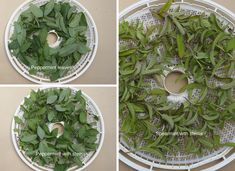 Peppermint and Spearmint ready for the dehydrator Uses For Mint Leaves, Drying Mint Leaves, Canning Pressure Cooker, Pressure Cooker Recipes, Pressure Cooking, Canning Tips, Canning Recipes, Spearmint Recipes, Canning Granny