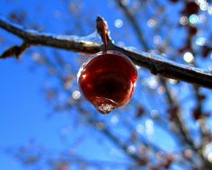 sparkling frozen apple
