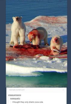Polar Bears: oh so cute and fuzzy. And covered in the blood of their baby seal victims.