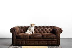 9 Modern Couch Styles To Decorate Your Home - Chesterfield Sofa