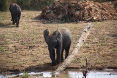 Cute ❤️ #Liwonde #National #Park #Malawi