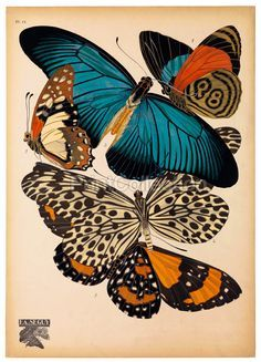 Image result for eugene seguy butterfly