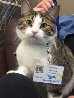 """Canadian airline turns kitty into staff member during Alberta evacuations, May 2016. """"Many of the evacuees from the Northern Alberta wildfires have been traveling with their beloved pets. We love animals, too, so we've been happy to help bring them to safety,"""" Canadian North said on Facebook. The airline took its compassionate response a step further when staff members volunteered to cat-sit Meow Meow, the pet of a Krystal Scott, pregnant passenger who was ready to go into labor."""