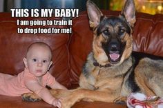 My aunt (who has a baby) has a big dog who I can totally imagine doing this. :) <3