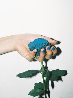 手/hand/青/blue/バラ/薔薇/rose/ネイル/nail/可愛い/かわいい/cute/美しい/beauty/beautiful
