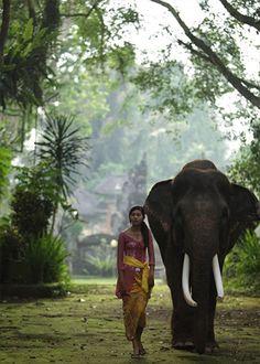 Elephant Safari Park, Indonesia