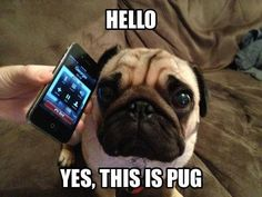 """Think I need an upgrade!"" #dogs #pets #Pugs Facebook.com/sodoggonefunny"