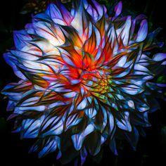 Nieuw in mijn Werk aan de Muur shop: Dahlia, blauw