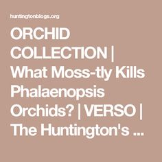 ORCHID COLLECTION   What Moss-tly Kills Phalaenopsis Orchids?   VERSO   The Huntington's Blog