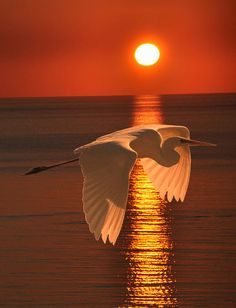 Beautiful Birds on Sunsets. Beautiful Sunset, Beautiful Birds, Beautiful World, Animals Beautiful, Animals Amazing, Pretty Animals, Beautiful Moments, Cool Pictures, Cool Photos
