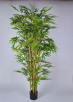 Growing Bamboo - Τεχνητό φυτό Μπαμπού σε γλάστρα 210cm Plants, Plant, Planets
