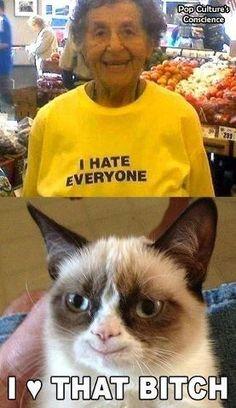 Grumpy Cat Quotes, Funny Grumpy Cat Memes, Funny Cats, Funny Jokes, Hilarious, Grumpy Kitty, Farts Funny, Jokes Pics, Funny Pictures