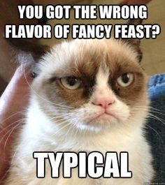 Funny pictures about Grumpy Cat finds Nemo. Oh, and cool pics about Grumpy Cat finds Nemo. Also, Grumpy Cat finds Nemo. Grumpy Cat Quotes, Meme Grumpy Cat, Grumpy Kitty, Funny Cats, Funny Animals, Cute Animals, Funniest Animals, Cats Humor, Humor Animal