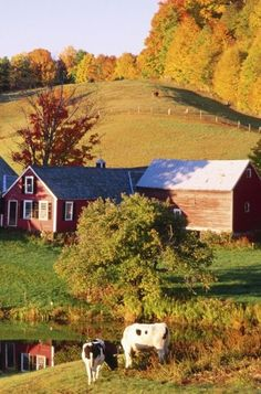 Country Living  Barn & Cows.... #Relax more with healing sounds: