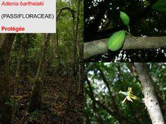 Connaissance et évaluation de la flore sauvage et des habitats naturels - Page 2