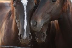 Wonder what they're whispering about? #horses #heads #whispering #photo print #SAteamEtsy