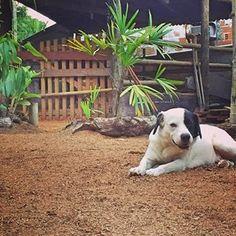 Aratu sempre fotogênico! Garoto propaganda Quatro Patas! 😉🖤🧡💚🐶 #dog #viralata #matilhaquatropatas #quatropatasclinicaveterinaria