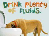 Want to feel better soon? Drink plenty of fluids.