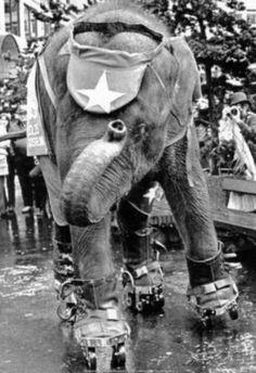 Roller Skating Elephant Archival Photo Poster Poster