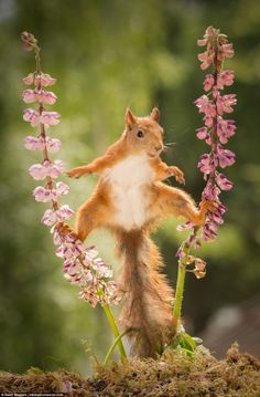 The astonishing moment was captured on camera by builder and part-time photographer Geert Weggen, in his garden in Bispgarden, Sweden