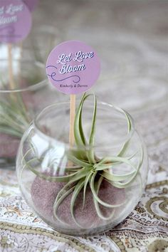 These DIY terrarium wedding favors are simple but stylish living table decorations and favor gifts, perfect for a wedding, shower or other event. Terrarium Wedding Favor, Plant Wedding Favors, Gifts For Wedding Party, Wedding Centerpieces, Wedding Decorations, Table Decorations, Wedding Things, Wedding Bands, Wedding Stuff