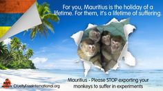 Petition · The Hon. Charles Gaëtan Xavier-Luc DUVAL G.C.S.K.,F.C.A., Deputy Prime Minister, Minister of Tourism: Please stop the suffering being inflicted on the monkeys of Mauritius · Change.org